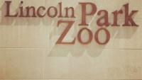 Lincoln Park Zoo implementa recortes debido a la pandemia del COVID-19