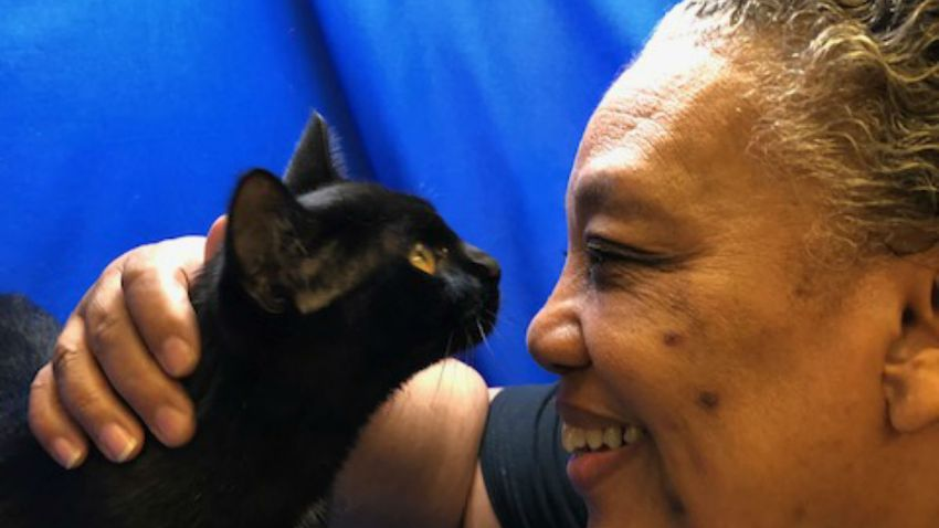 chicago animal care control