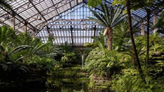 Celebrate the Cubs' Win at Garfield Park Conservatory