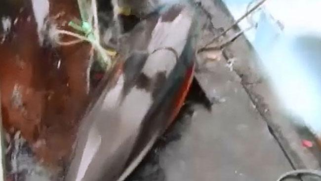 tlmd_delfin_matanza_ok