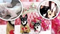 De callejeros a modelos: la asombrosa historia de una diseñadora que salva perritos abandonados