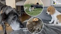 Tres cachorritos sin hogar y  un gruñón en su reino, así acabó todo – El Dodo
