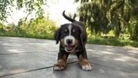 Alertan sobre el aumento en estafas relacionadas con adopción de mascotas