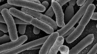 EEUU reporta caso de bacteria inmune a antibióticos
