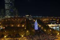 Millennium Park Tree