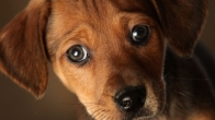 Find Your Shelter and Give a Pet a Loving Home