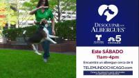 Únete y adopta una mascota el sábado 18 de agosto.