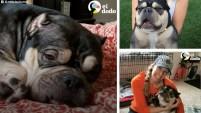 En este video cortesía de El Dodo, mira la historia de Layla. Fue abandonada en un parque por un criador de perros y se notaba que acababa de t...