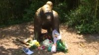 No parecía hacerle daño al menor, pero funcionarios del zoo no tenían alternativa