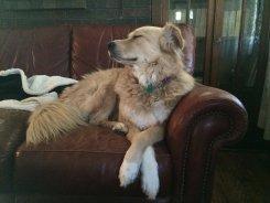¡Feliz día nacional del perro!