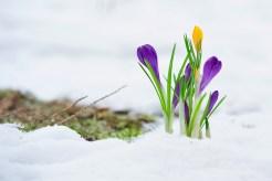 Lluvias primaverales podrían traer nieve a Chicago