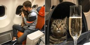 Viral: así engañó a aerolínea para viajar junto a su gato
