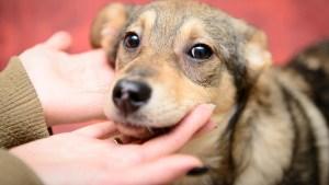 Total de mascotas que encontraron un nuevo hogar