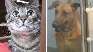 Albergue busca ayudar a los dueños de mascotas