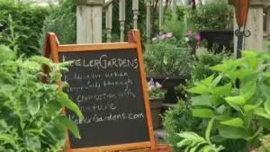 Organización premia a residentes con los mejores jardines de Chicago