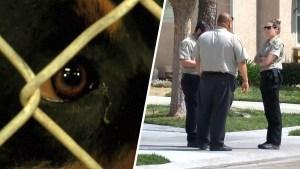 Horrendo: mascotas enloquecidas matan a un bebé