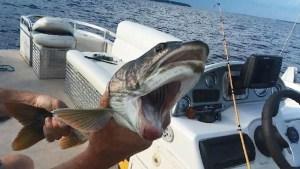 Impresionante: atrapan un extraño pez con dos bocas
