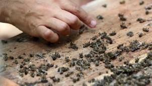 Nube tóxica mata más de 15 millones de abejas
