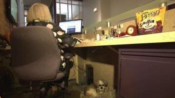 Dejan llevar perros a este trabajo para facilitar adopción