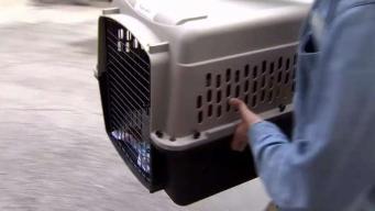 Evalúan a animales rescatados tras huracán Michael