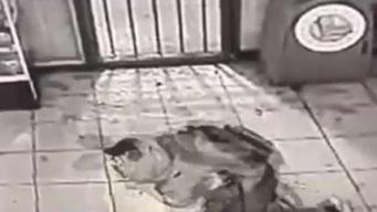 En cámara: entra para robar pero se estrella contra el suelo