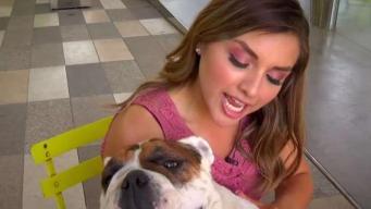 Reportera Reyna Cavazos presenta a su mascota Pancho