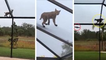 ¿Quién fue más veloz? El gato salvaje o la ardillita asustada