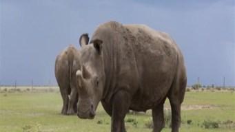Más de un millón de especies en riesgo de extinción