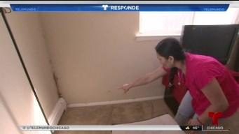 Televidente pide ayuda tras vivir en apartamento con moho