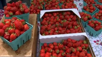 Un vistazo al festival de fresas en Long Grove
