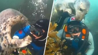 Video viral: foca salvaje pide caricias como un perrito