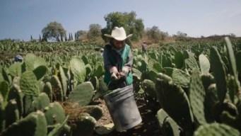 México: revelan cifras alarmantes en el día del niño