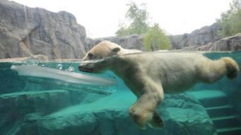 Entrada gratis al Brookfield Zoo en agosto