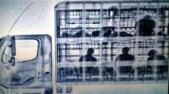 En video: con rayos X detectan a migrantes escondidos