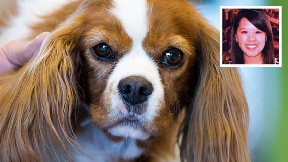 Perro de enfermera no tiene ébola