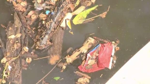 Alerta verde: contaminación por plástico en río Anacostia