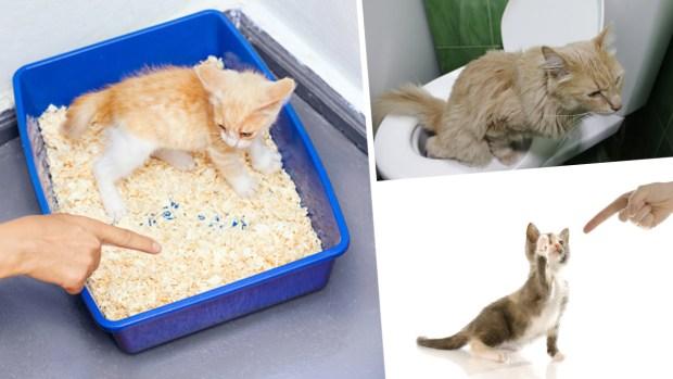 [TLMD - NATL] Cómo entrenar a tu gato para que vaya al baño