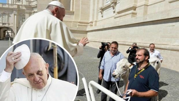 Lo que hará el papa Francisco con la vaca que le regalaron