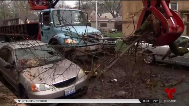 Destrucción y árboles caídos por tormentas en Albany Park
