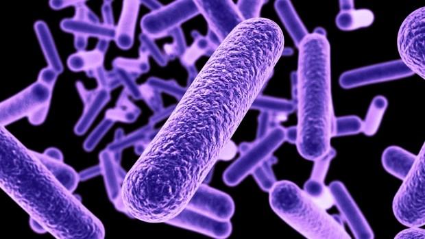Bacterias asesinas e imparables: cómo te pueden afectar