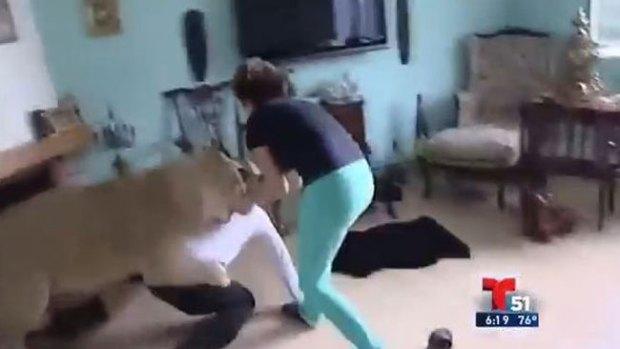 Video: Impacto: feroz leona le clava las garras
