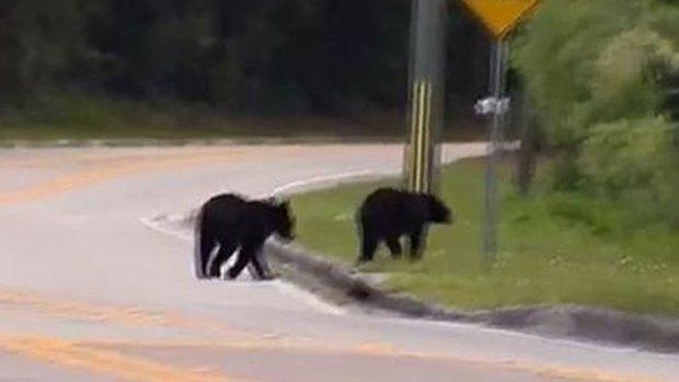 Video: Botaba la basura y se le abalanzó un oso