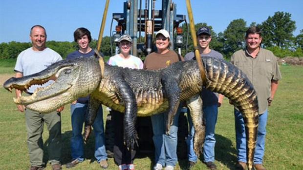 Video: Capturan gigantesco lagarto en un río