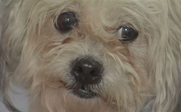 Chicago adoptó más de mil mascotas en evento Desocupar Albergues
