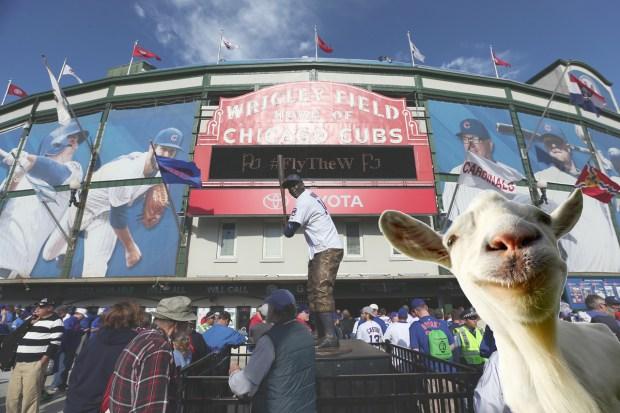 """""""Murphy"""", el nombre de mala suerte que sepultaron los Cubs"""