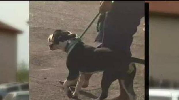 [TLMD - Chicago] Niño de 4 años muere al ser atacado por perro