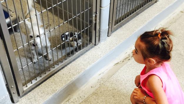 Gran cantidad de mascotas ya tienen hogar en Chicago e IL