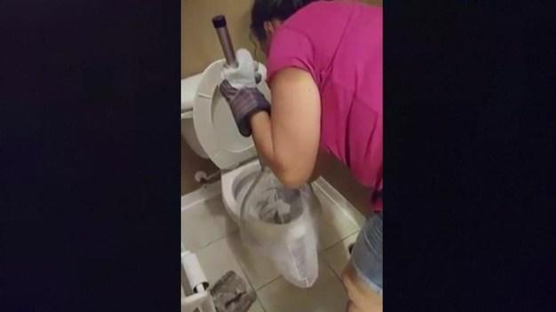 Se encuentra con iguana dentro del inodoro