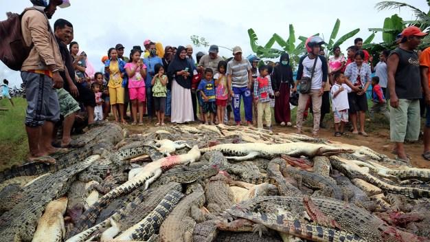 Sangrienta venganza: ¿por qué este pueblo sacrificó a casi 300 cocodrilos?
