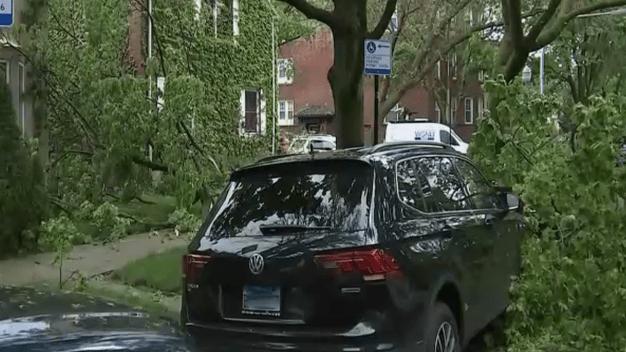 Rogers Park: fuertes tormentas causan caída de árboles